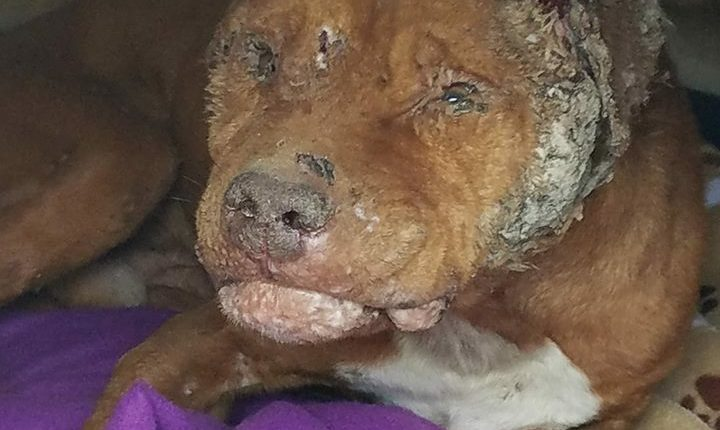 Dog survived unimaginable cruelty