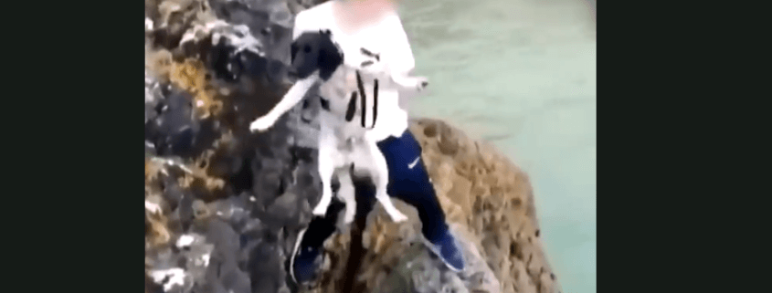 Dog hurled from cliff into the sea