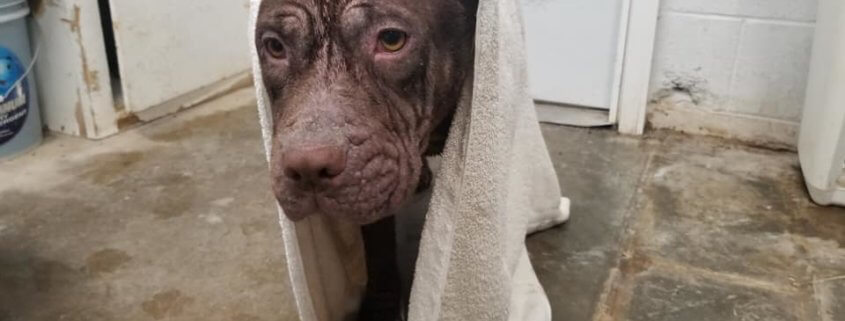 Discarded like trash, dog rescued from dumpster