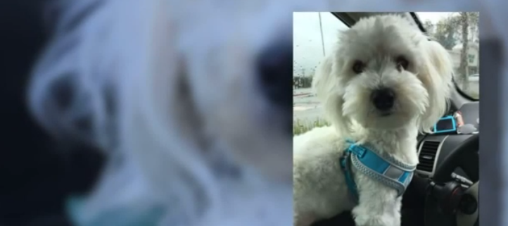 Missing dog thrown into traffic