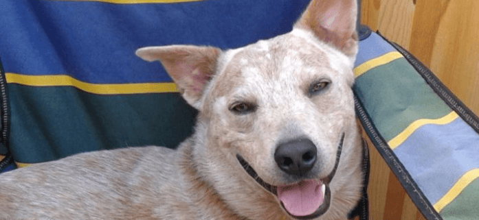 Dog to be executed after years of incarceration