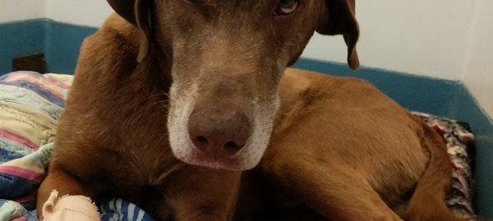 Dog unclaimed after camp fire