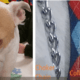 Dog found with zip ties around neck