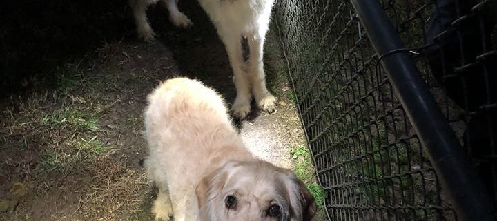 Dogs abandoned at dog park
