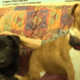 Couple moved and left dogs abandoned in empty house