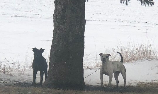 Dogs abandoned in the middle of nowhere