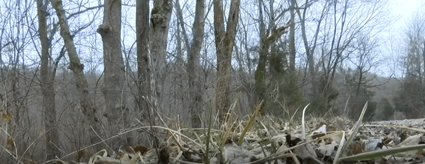 Dogs brutally killed in Indiana