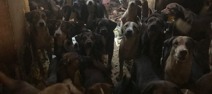 Dogs found at house fire