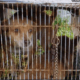 Two dogs abandoned in a bird cage