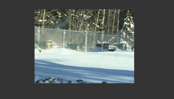 Dogs living outside with wooden boxes at breeding facility