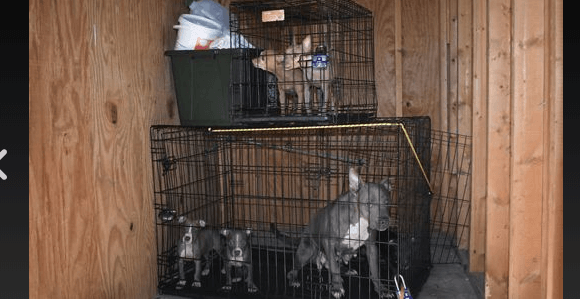 Dogs abandoned in storage unit