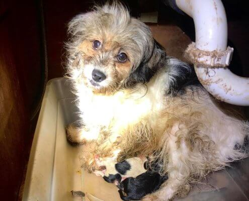 dogs rescued from horrific conditions