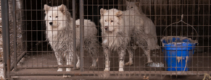 Dogs rescued from appalling conditions at puppy mill