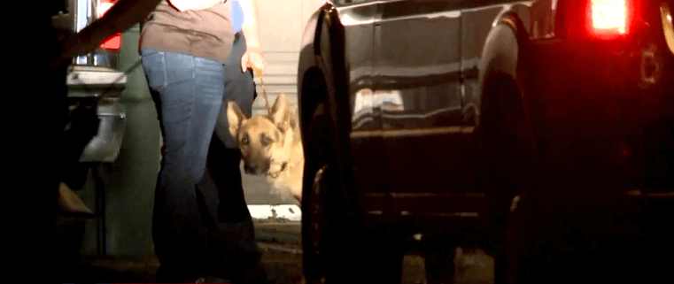 Dogs rescued from deplorable conditions