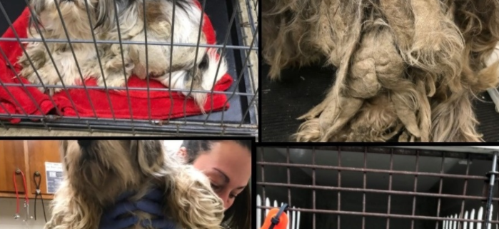 neglected dogs seized from hoarder's home