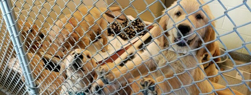 Dogs and puppies seized from squalid conditions