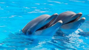 Dolphinariums banned in Mexico City