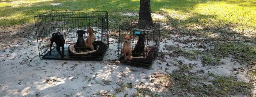 Dumped and abandoned dogs in Florida