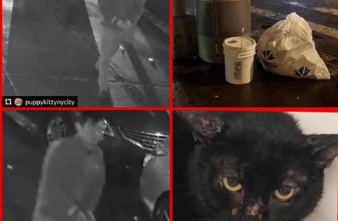 Cat dumped in sealed bucket by trash