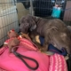 Dying dog needs a special home