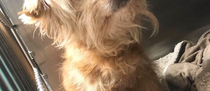Elderly blind dog in need
