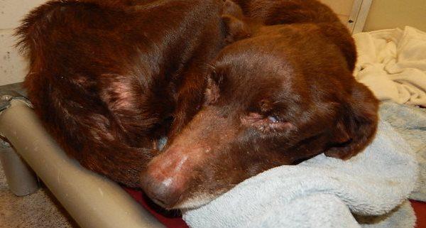 elderly blind dog on death row