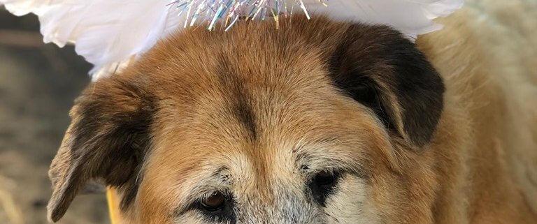Elderly dog at animal control