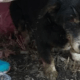 Elderly dog dug out of grave