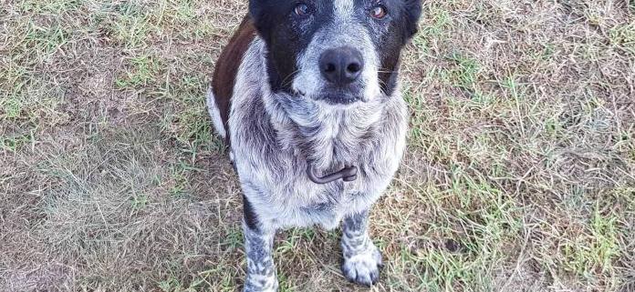 Elderly dog kept lost child safe