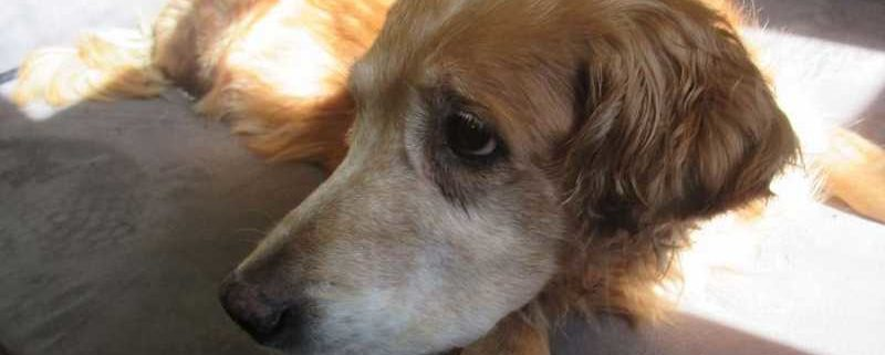 Elderly dog abandoned and left to die