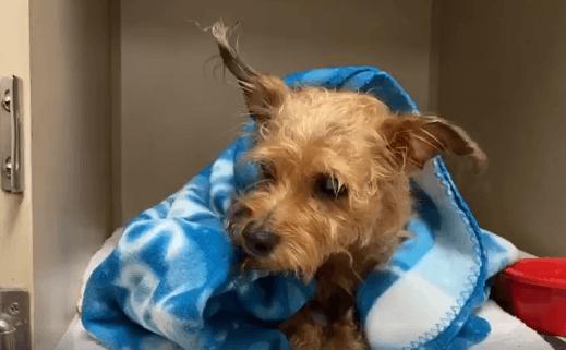 Elderly dog sent to dog pound after owner died