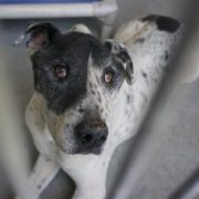 Old dog dumped when he needed his family