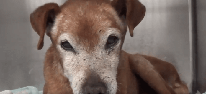 Elderly dog surrendered