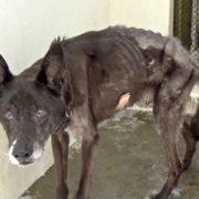 Horribly neglected senior dog