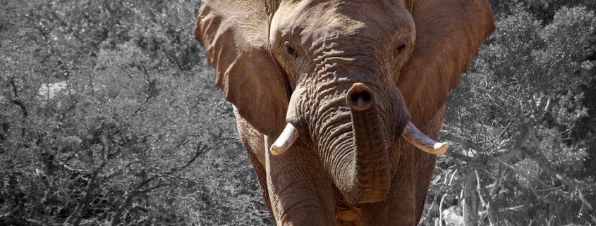 Elephant trampled hunter to death