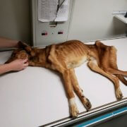 Dog starved to the brink of death