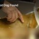 Homeless woman helped injured dog