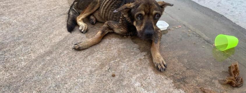Emaciated senior dog has died