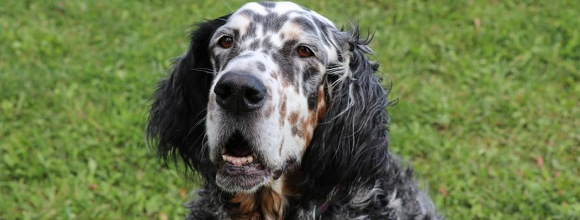 Dog owner granted sick pay to care for ailing pet
