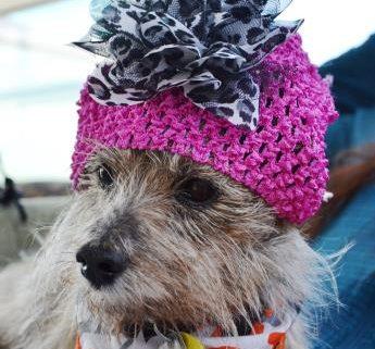 Senior dog needs a family, will you help?