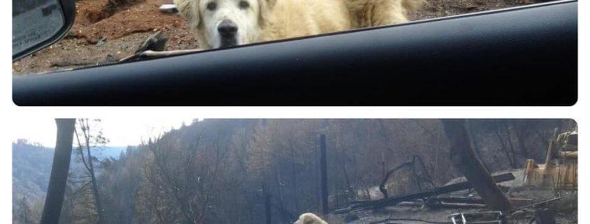 Faithful dog waited for family