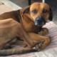 Faithful dog waits for deceased owner