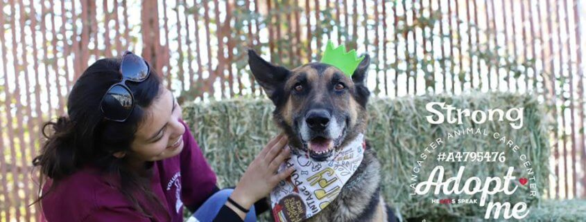 Family didn't show up to claim senior shepherd