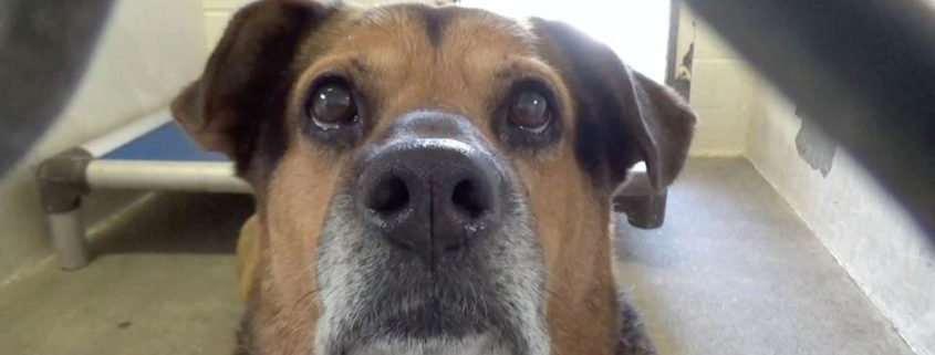 Family didn't want responsibility, turned senior dog over to shelter