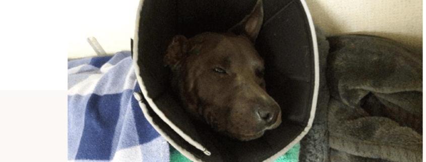 Family dog attacked
