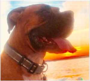 Family dog chopped up by boat prop