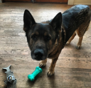 Family fights to keep police K9 partner