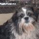 Family surrendered dog