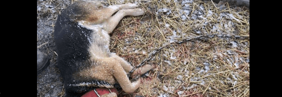 Family's dog beaten to death