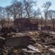 Dozens of animals died in fire